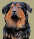 Werkstatthund Fiete begrüsst Sie in der Annahme