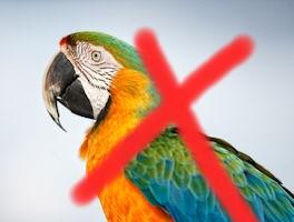 kein Papagei